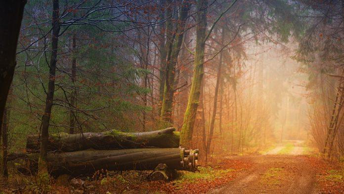 prețul lemnului de foc creșterea prețului lemn de foc Suprafaţa pădurilor virgine trucarea unei licitații lemn padure
