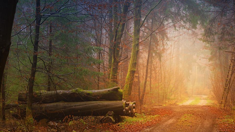 Suprafaţa pădurilor virgine trucarea unei licitații lemn padure