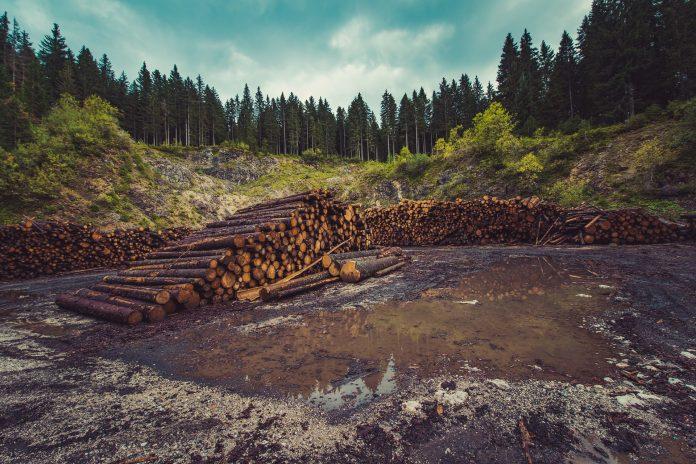 Transportul de lemn la ieșirea din pădure și până la primul punct de transport este aproape inexistent, cu o pondere de sub 1% stoparea tăierilor ilegale de arbori