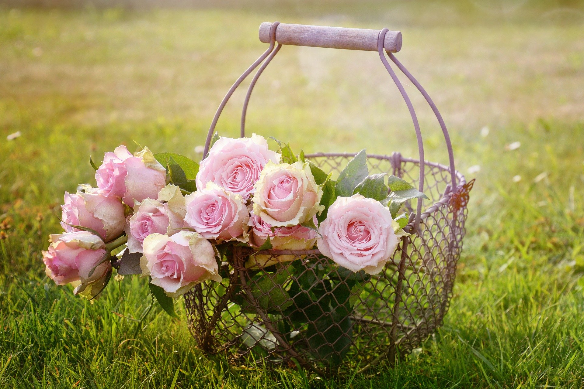 flori afaceri românia